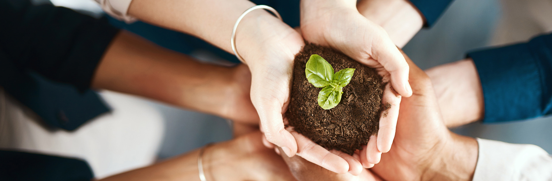 Diverse hands holding soil sprouting a green plant